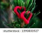 Small photo of Closeup of a green tree with red hearts on pins and needles. Two small heart hanging on pins and needles