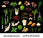 cooking spices  thai cuisine... | Shutterstock .eps vector #1591353304