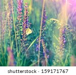 White Butterfly On Wild Flower...