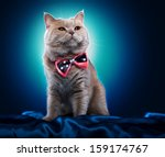 Stock photo british cat with a bow tie 159174767