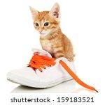 Cute Little Red Kitten In Shoes ...