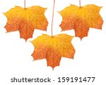 Autumn Leaf  Isolated On White...