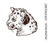 Cougar Baby Tabby  Large Felid...
