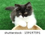 Stock photo little cute kitten on green grass 159197591