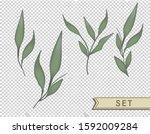 plants isolated vector... | Shutterstock .eps vector #1592009284