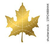 Golden Maple Leaf On A White...