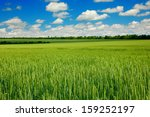 Summer Landscape With Sky And...