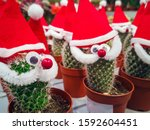 Cactus With Christmas Hat....