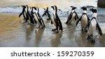 cape town   african penguin... | Shutterstock . vector #159270359