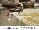 boulders beach   cute african... | Shutterstock . vector #159270371
