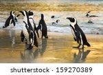 African Penguins At Sunrise....