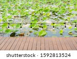 lotus leaves in pond  with... | Shutterstock . vector #1592813524