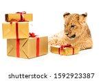 Cute Lion Cub Near Golden Gifts ...