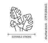 monstera leaves linear icon.... | Shutterstock .eps vector #1593186661