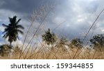 golden field before rain coming  | Shutterstock . vector #159344855