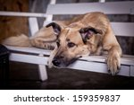 Stock photo dog romantic 159359837