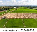 thai farmer working at small... | Shutterstock . vector #1593618757