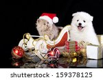 Stock photo white dog spitz and kiten persian wearing a santa hat cat and dog 159378125
