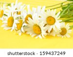 Chamomile Flowers On Yellow...