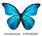 Stock photo beautiful butterfly isolated on a white background 159458369