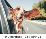 Stock photo a basset hound in a car vintage toned 159484421