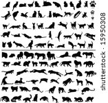 Stock photo  silhouettes of big and small cats 15950308