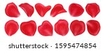 rose petals isolated on white... | Shutterstock . vector #1595474854