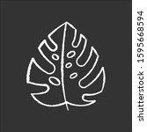 monstera leaf chalk icon.... | Shutterstock .eps vector #1595668594