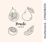 pomelo fruit graphic drawing.... | Shutterstock .eps vector #1596038254
