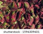 Hydrangea Flower Macro Still...