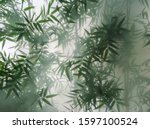 Small photo of tropical bamboo trees behind the frosted glass in the fog with backlighting. decoration of green plants premises, background. the natural exotic design.