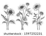 black and white sunflower... | Shutterstock .eps vector #1597252231