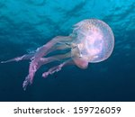 Luminescent Jellyfish ...