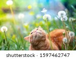 Cat On Nature Outdoors. Funny...