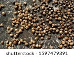 many of nutmeg close up dried... | Shutterstock . vector #1597479391