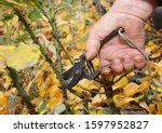 Pruning Tips To Prevent Wind...