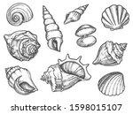 Set Of Isolated Seashell...