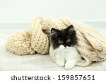 Stock photo little cute kitten with towel on floor 159857651