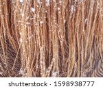 Warm Winter Hair Of Horses...