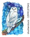 White Owl Night Winter...