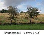 two trees beside the wicker...   Shutterstock . vector #159916715