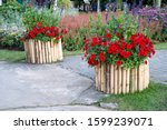 Red Flower Grow On Flower Beds...