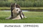 Stock photo cat and dog friendship 159943241