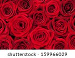 Stock photo beautiful red roses 159966029