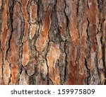 Bark Of Pine Tree.