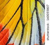 Stock photo closeup painted jezebel butterfly s wing deilas hyparete 160055807