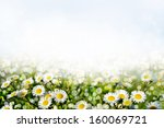 Summer. Background Of Flowers.