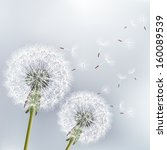 Stylish floral background with two flowers dandelions. Beautiful nature background vector. Trendy gray background. Vector illustration | Shutterstock vector #160089539