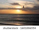 Pelican Flying Over Captiva...