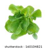 top view of  lettuce tree... | Shutterstock . vector #160104821